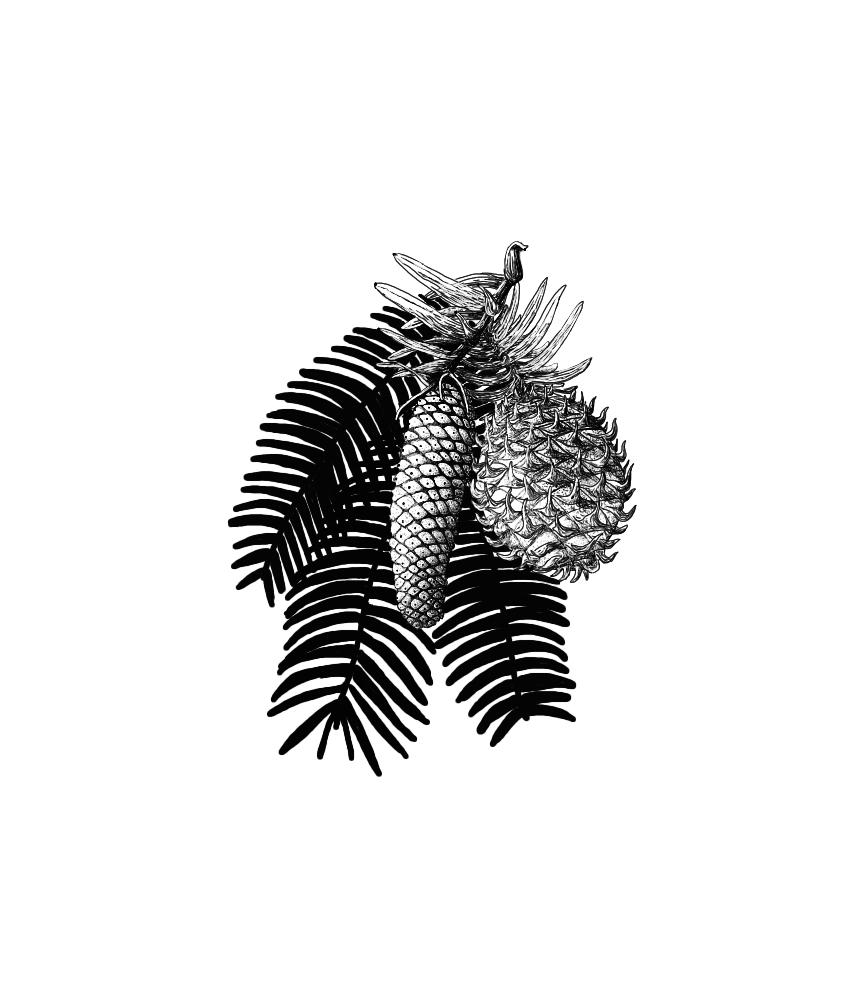 wollemi pine front3.jpg