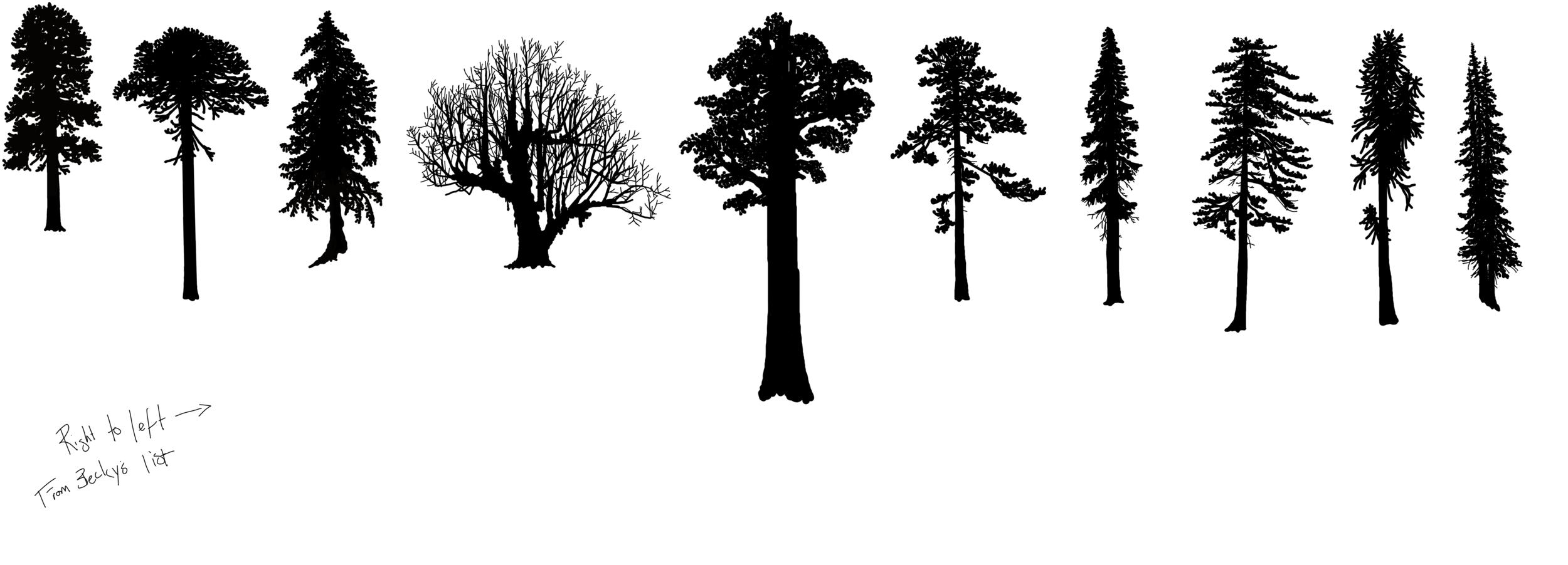 hoyt trees conifer.png