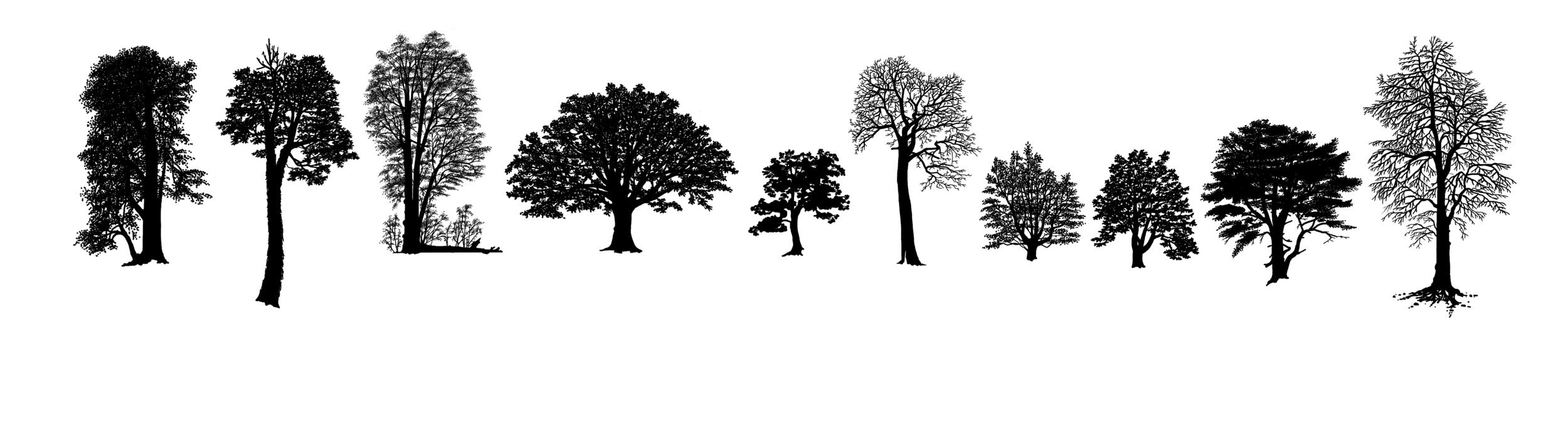 hoyt trees angiosperm2.png