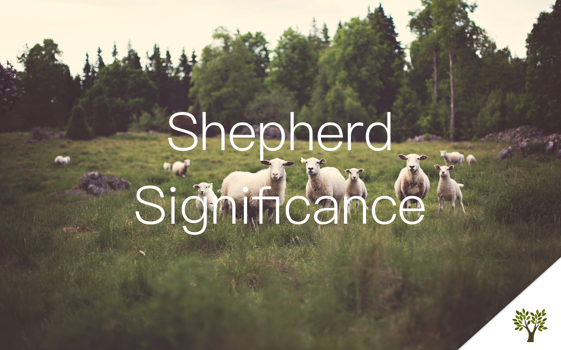 Shepherd Significance  Gerald Young