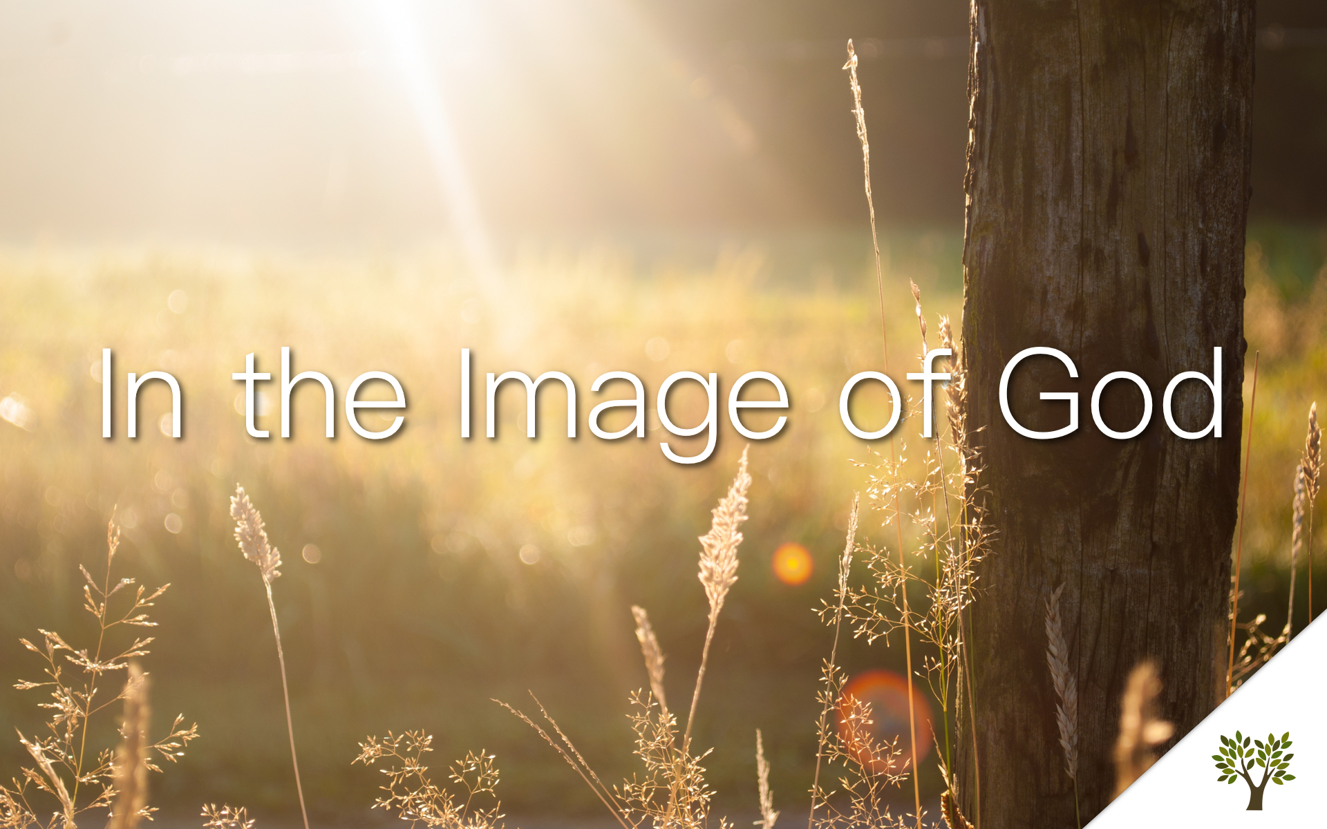 In the Image of God  Gerald Young