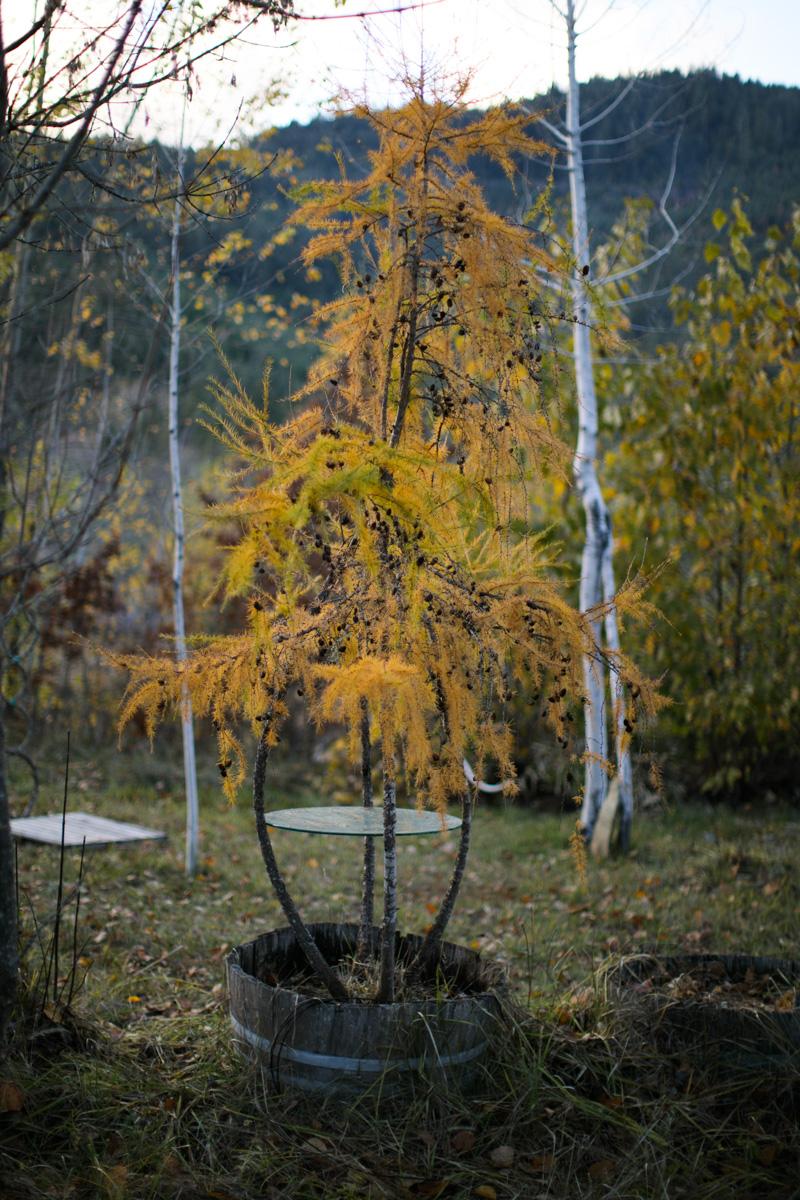 Arborsmith-112116-206.jpg