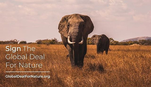 I just signed the #GlobalDealForNature calling on world leaders to protect half of our lands and seas. Please join me! Sign the petition atglobaldealfornature.org/