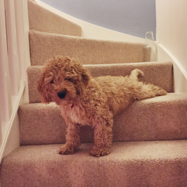 He likes to survey the room from the top of the stairs but can't be bothered to drag his back legs down.