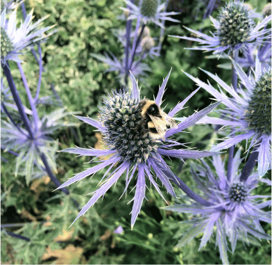 Thistle with Bee