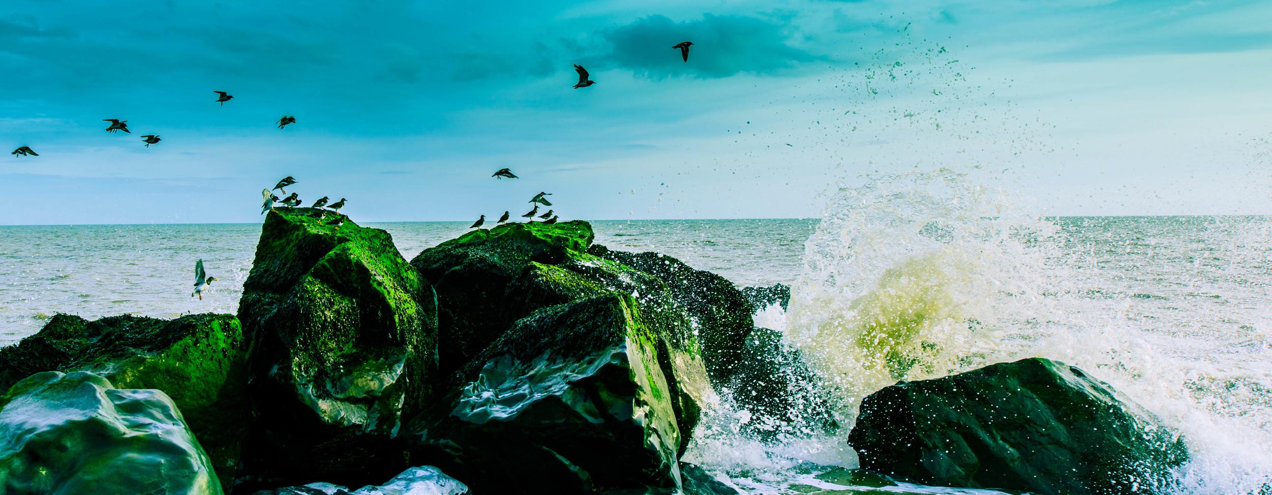 Bird Splash.jpg