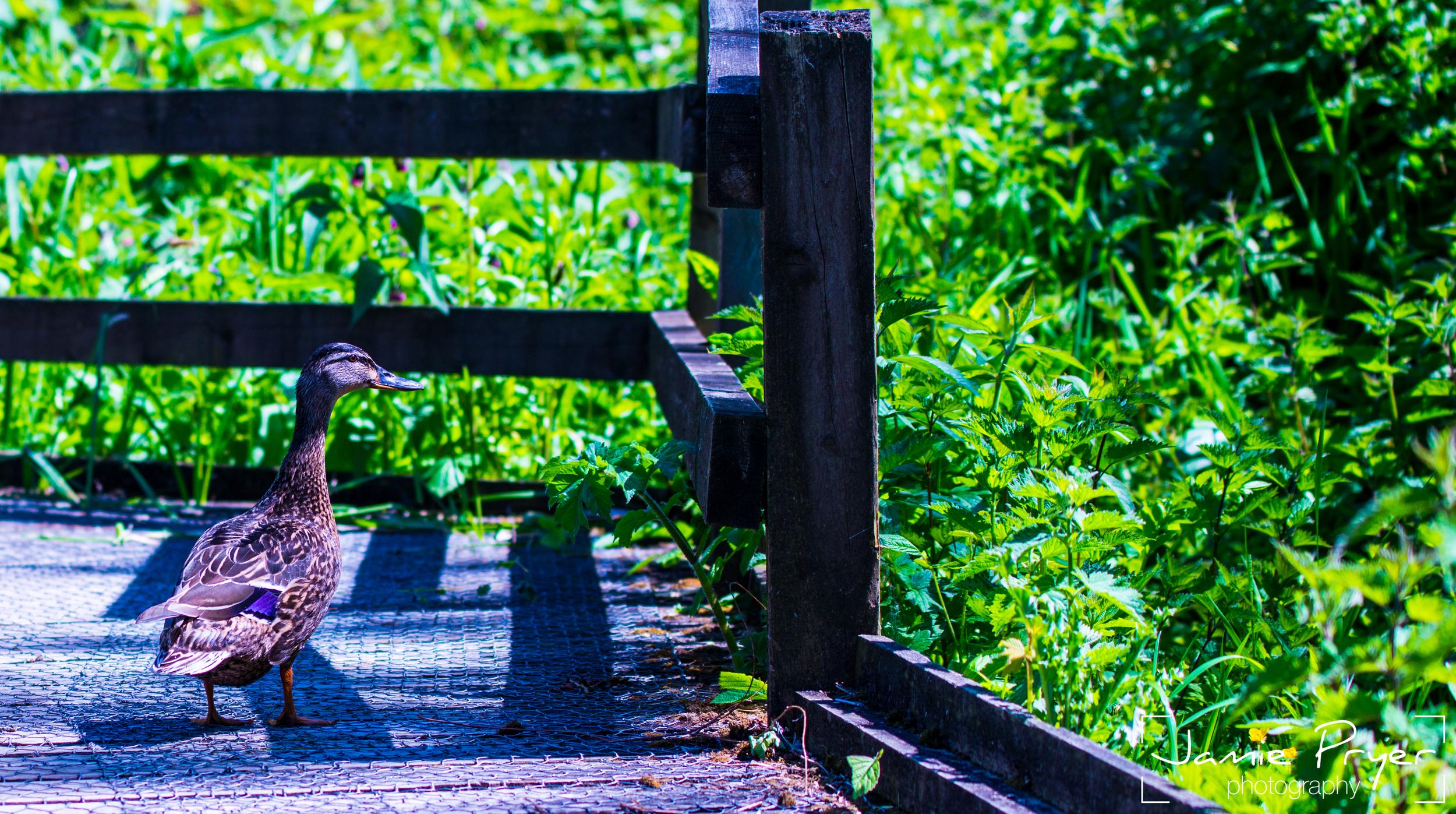 Path or Grass.jpg