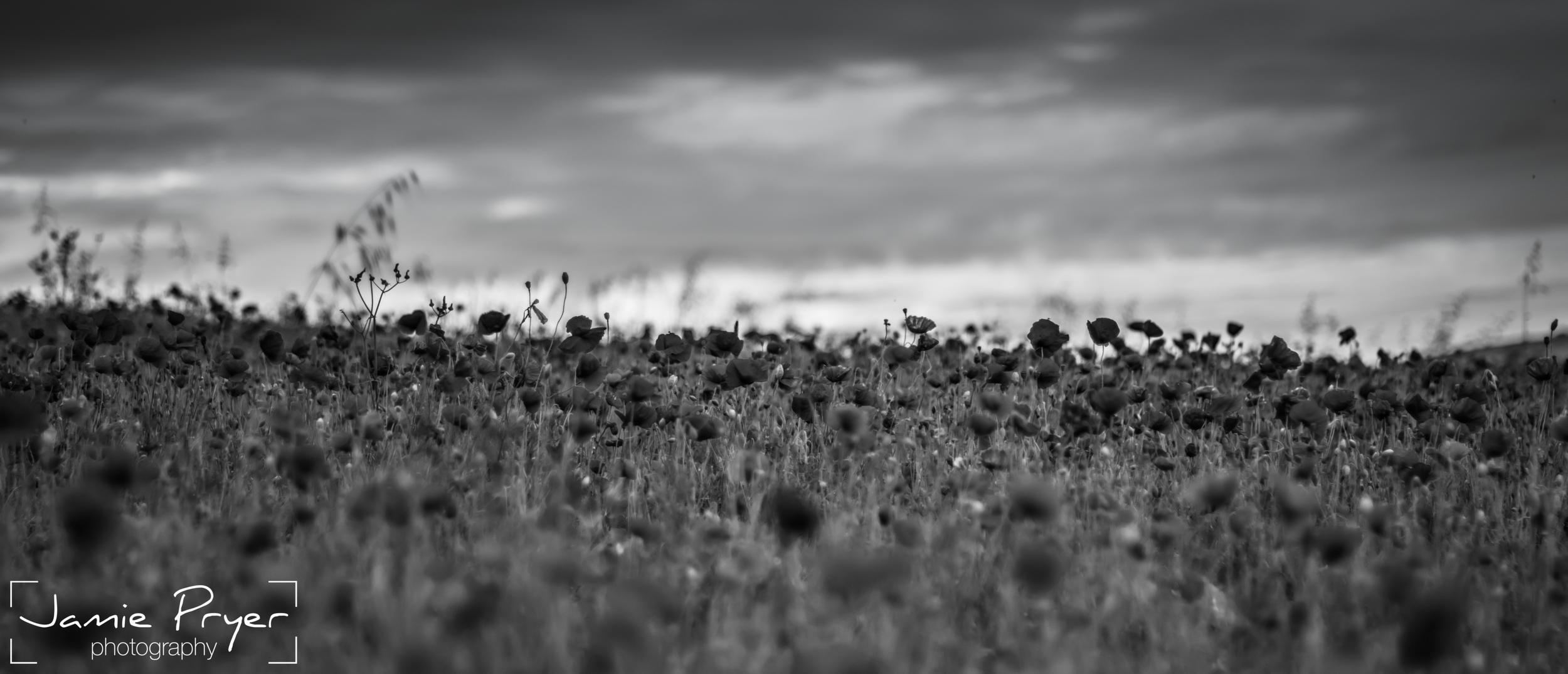 Poppies9.jpg