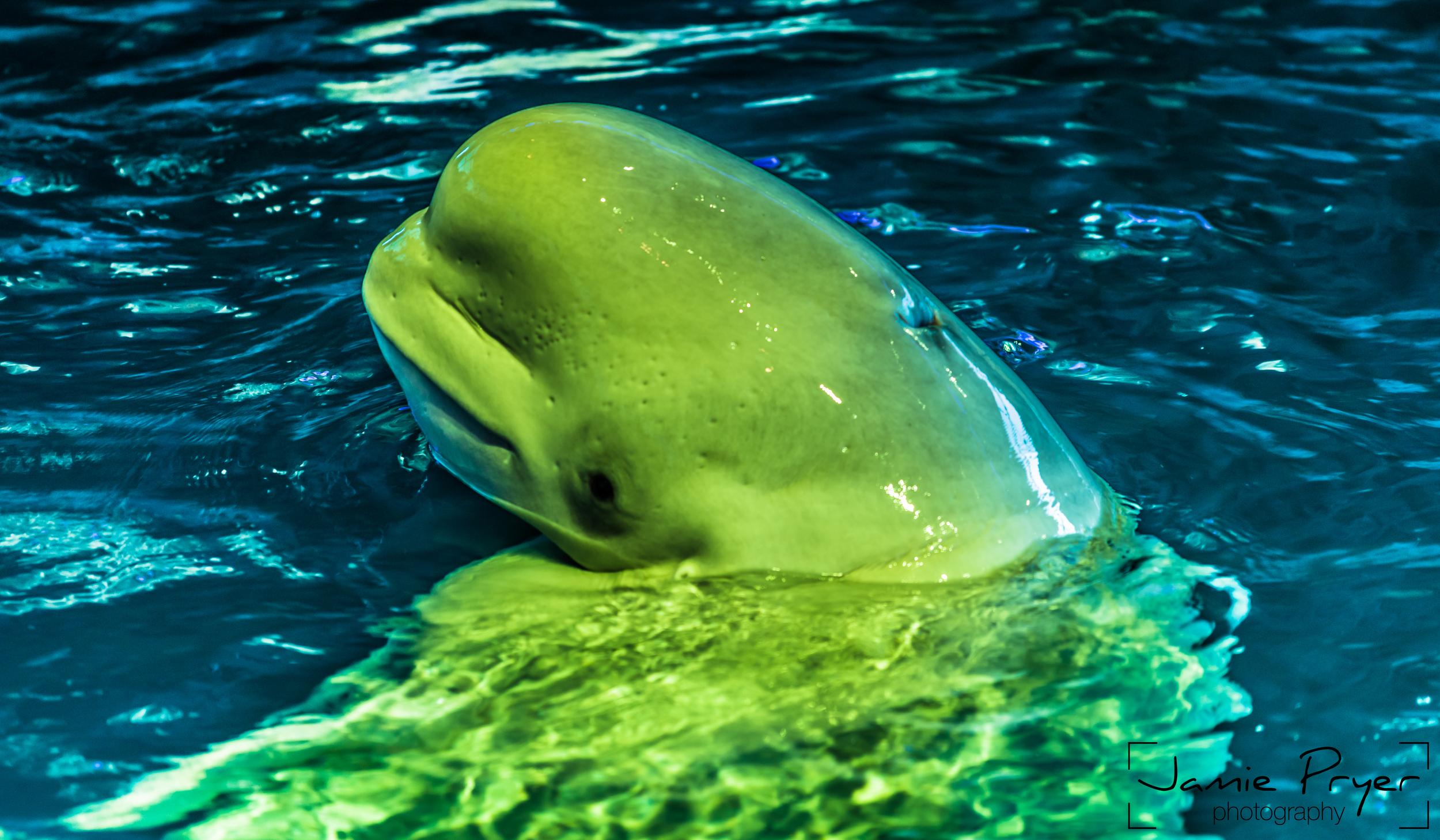 Baby Whale-2.jpg