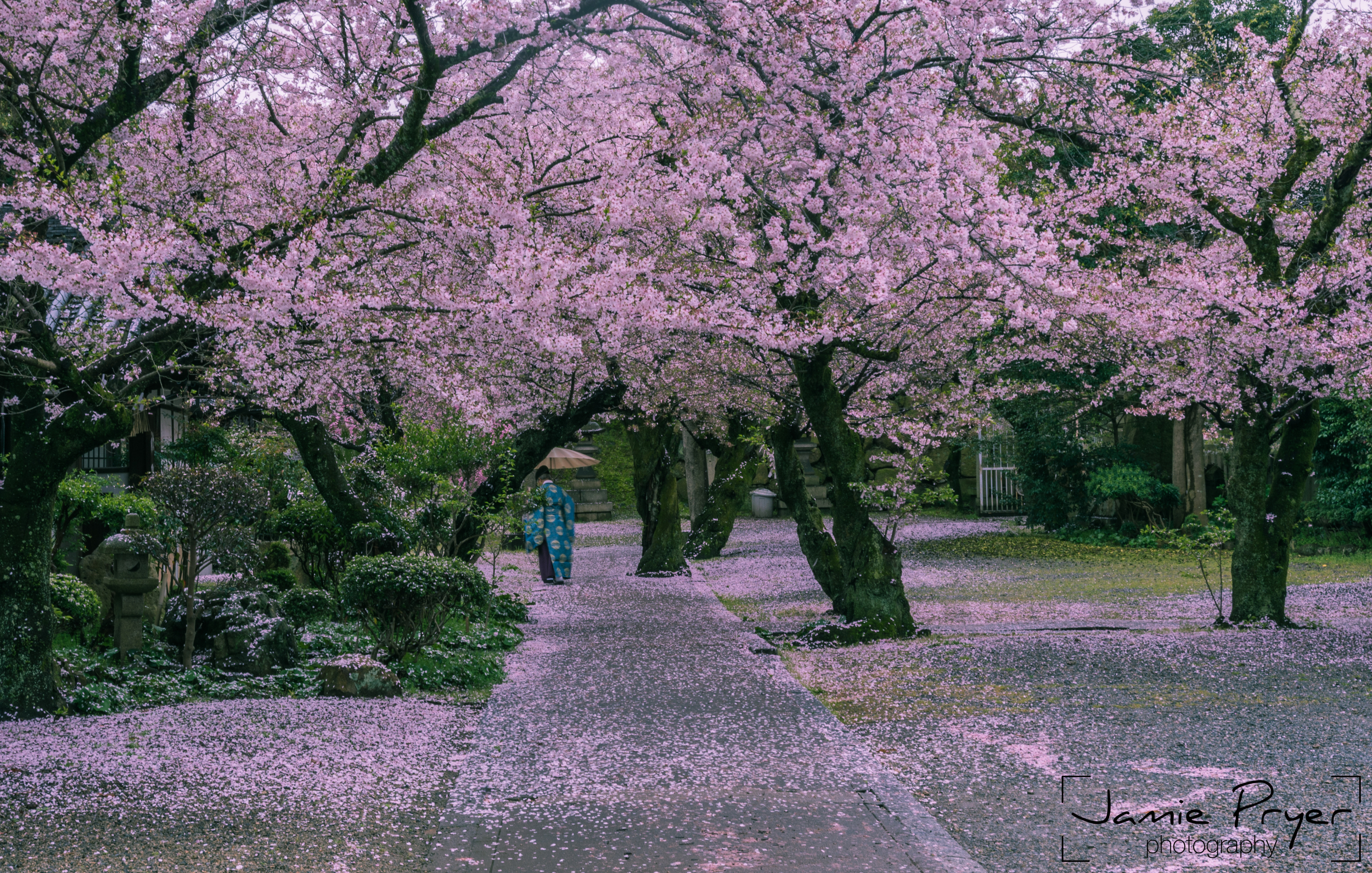 Walking in the Blossum-2.jpg