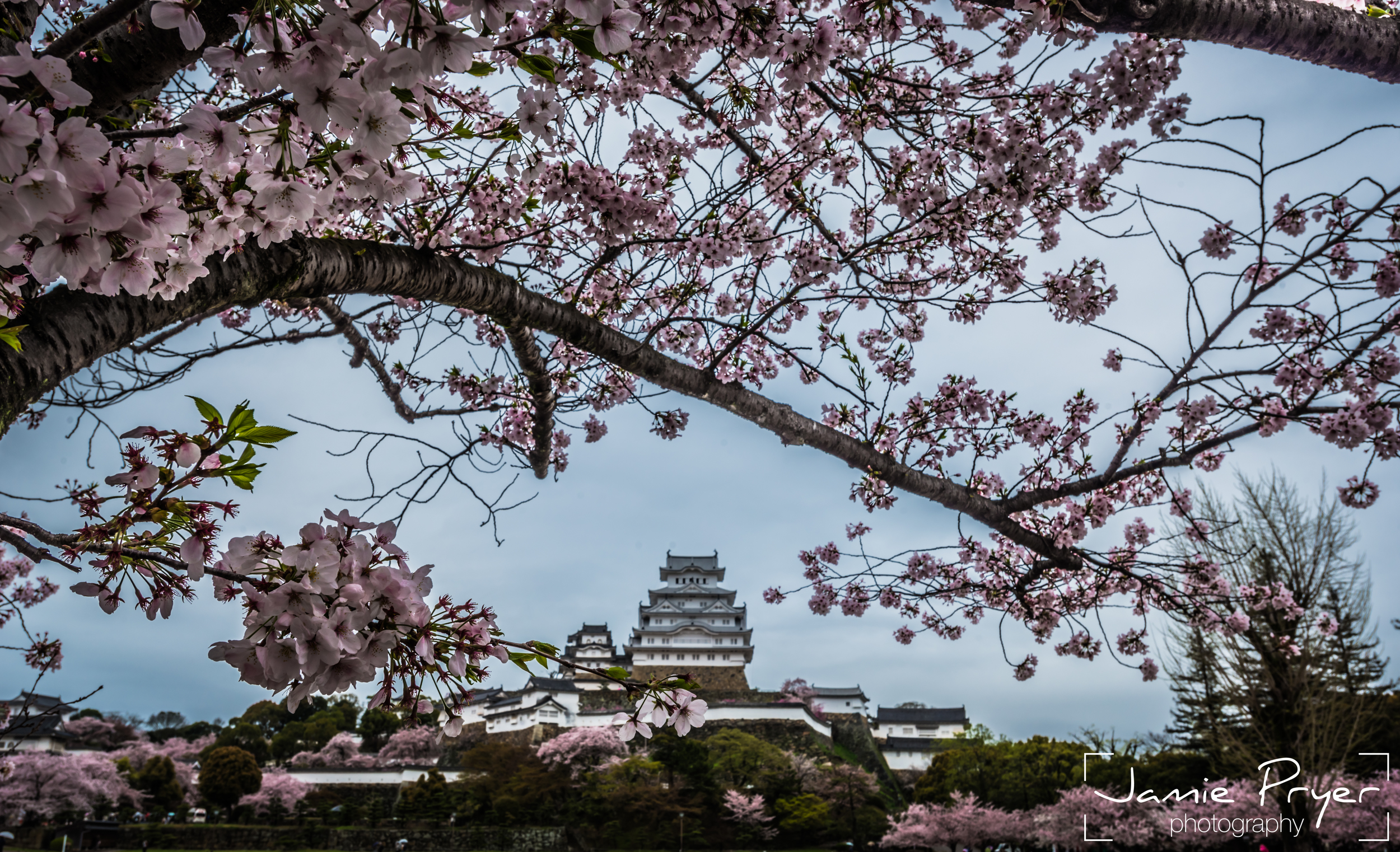 Temples and Blossum-2.jpg