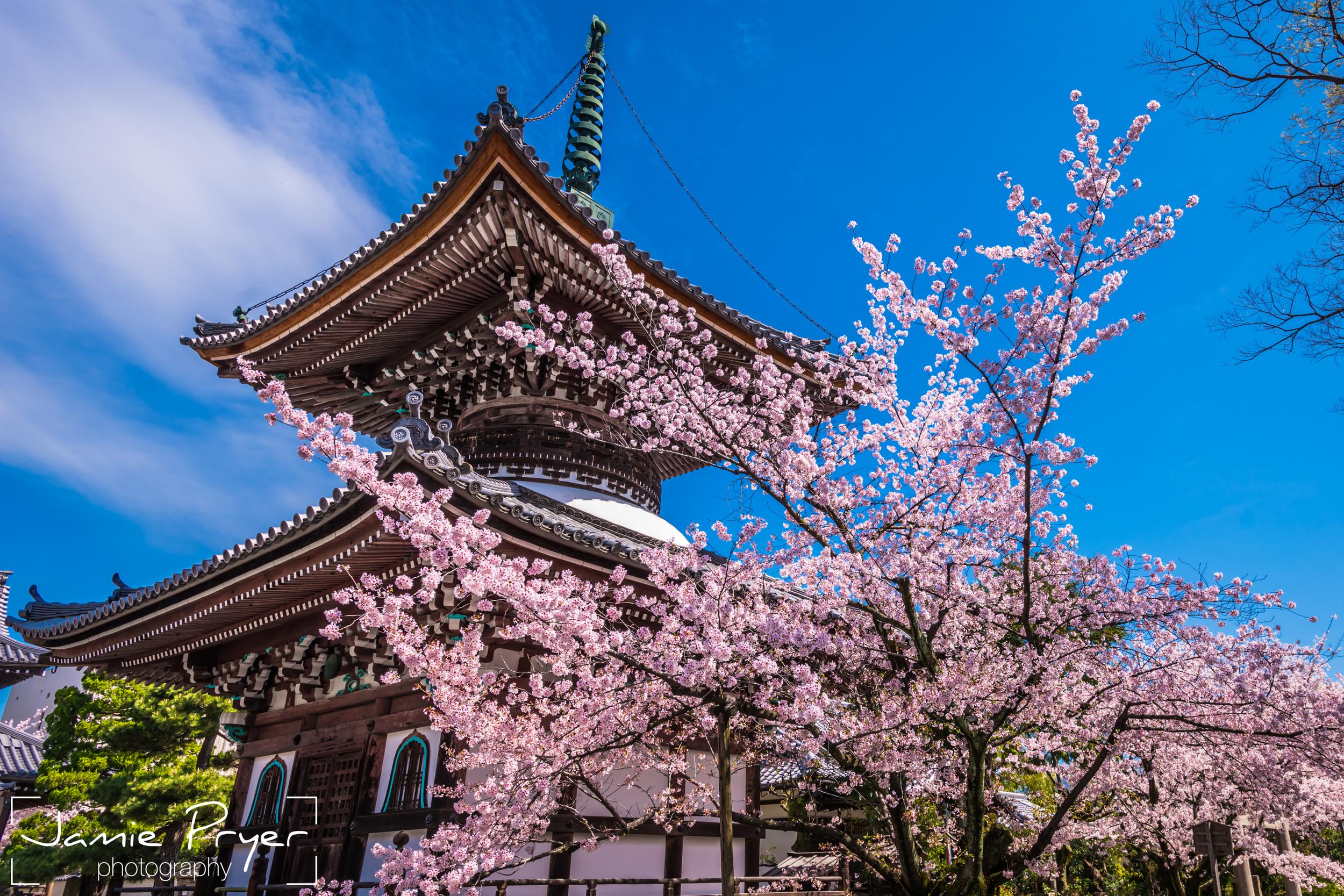 Blossum and Architecture.jpg