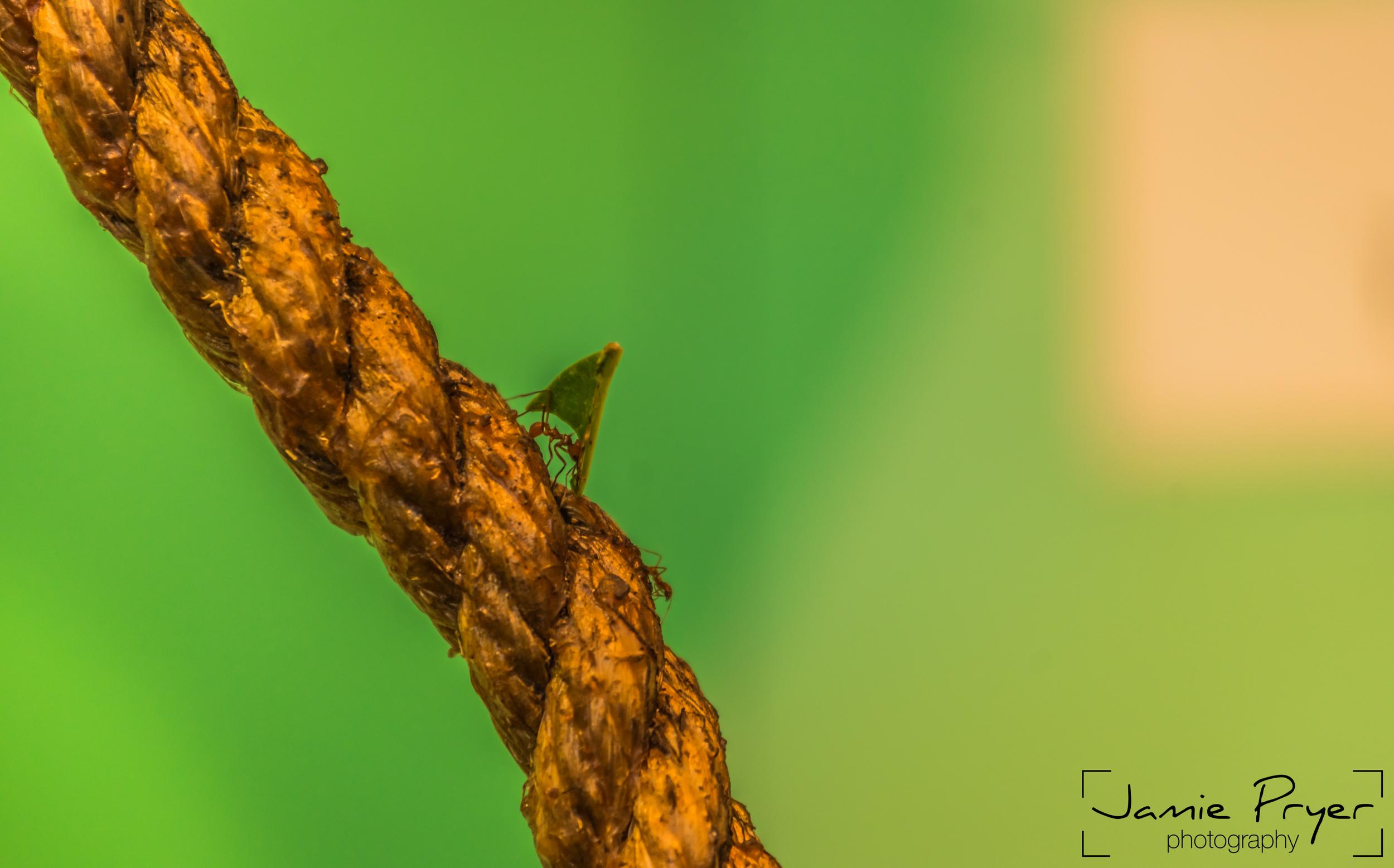 Moving Ants.jpg