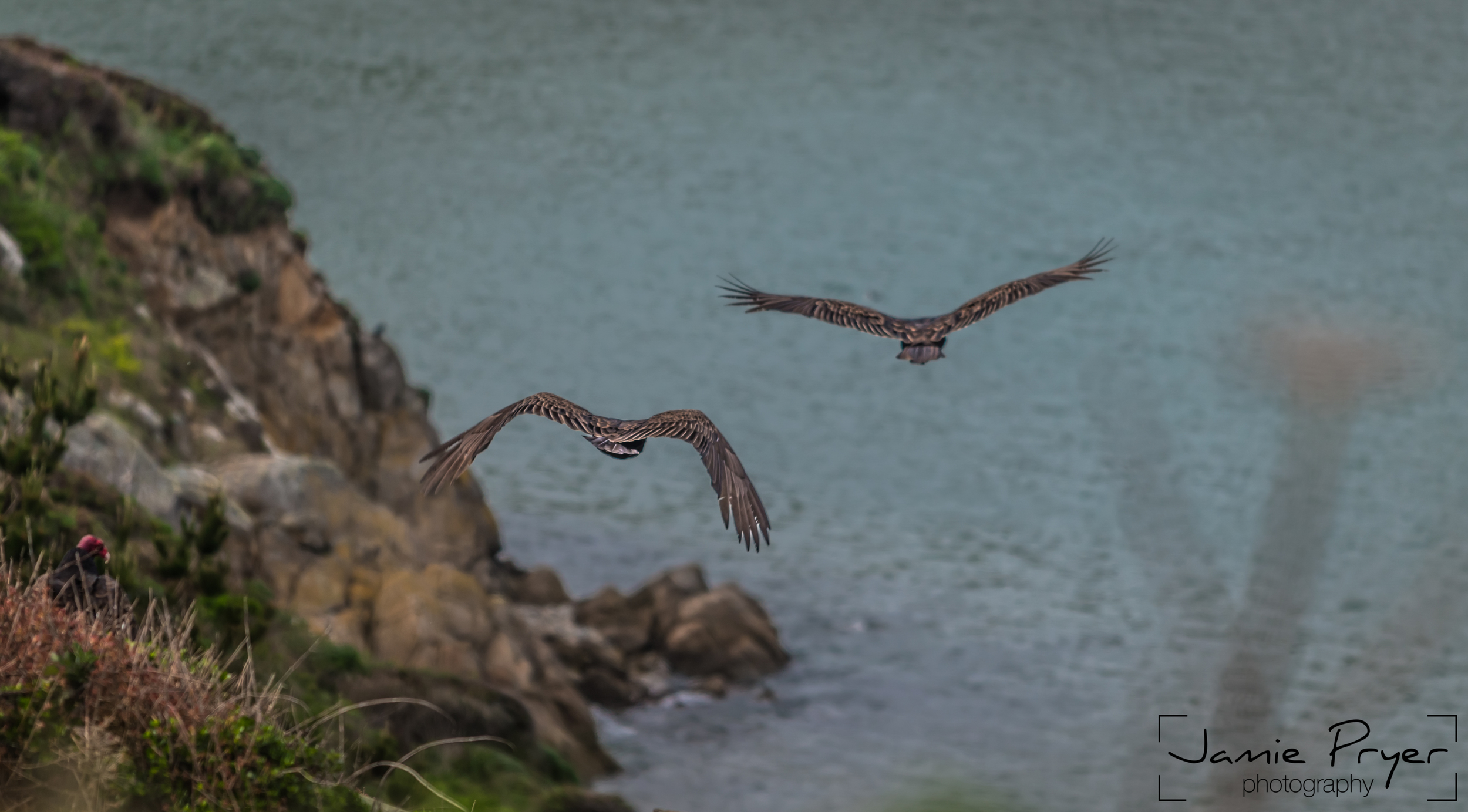 Flight of Vultures-2.jpg