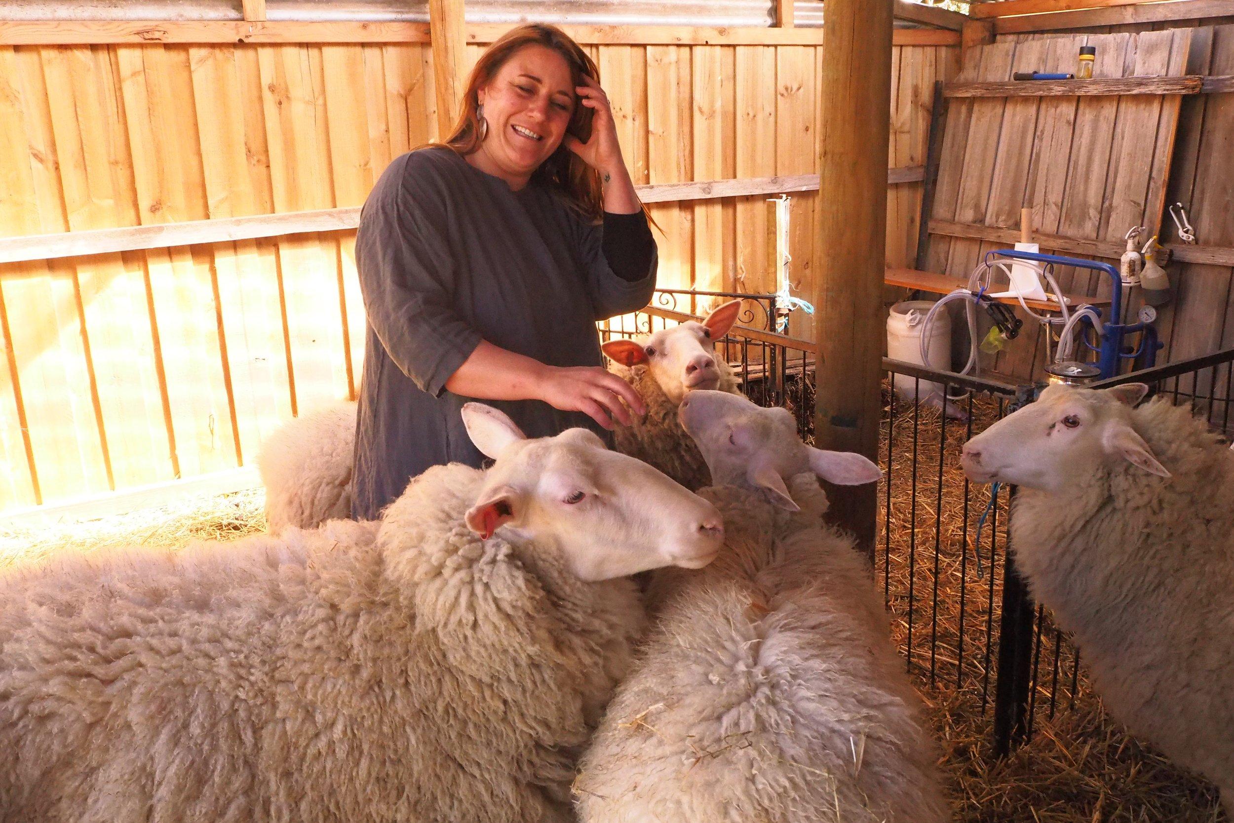Mel's Sheep