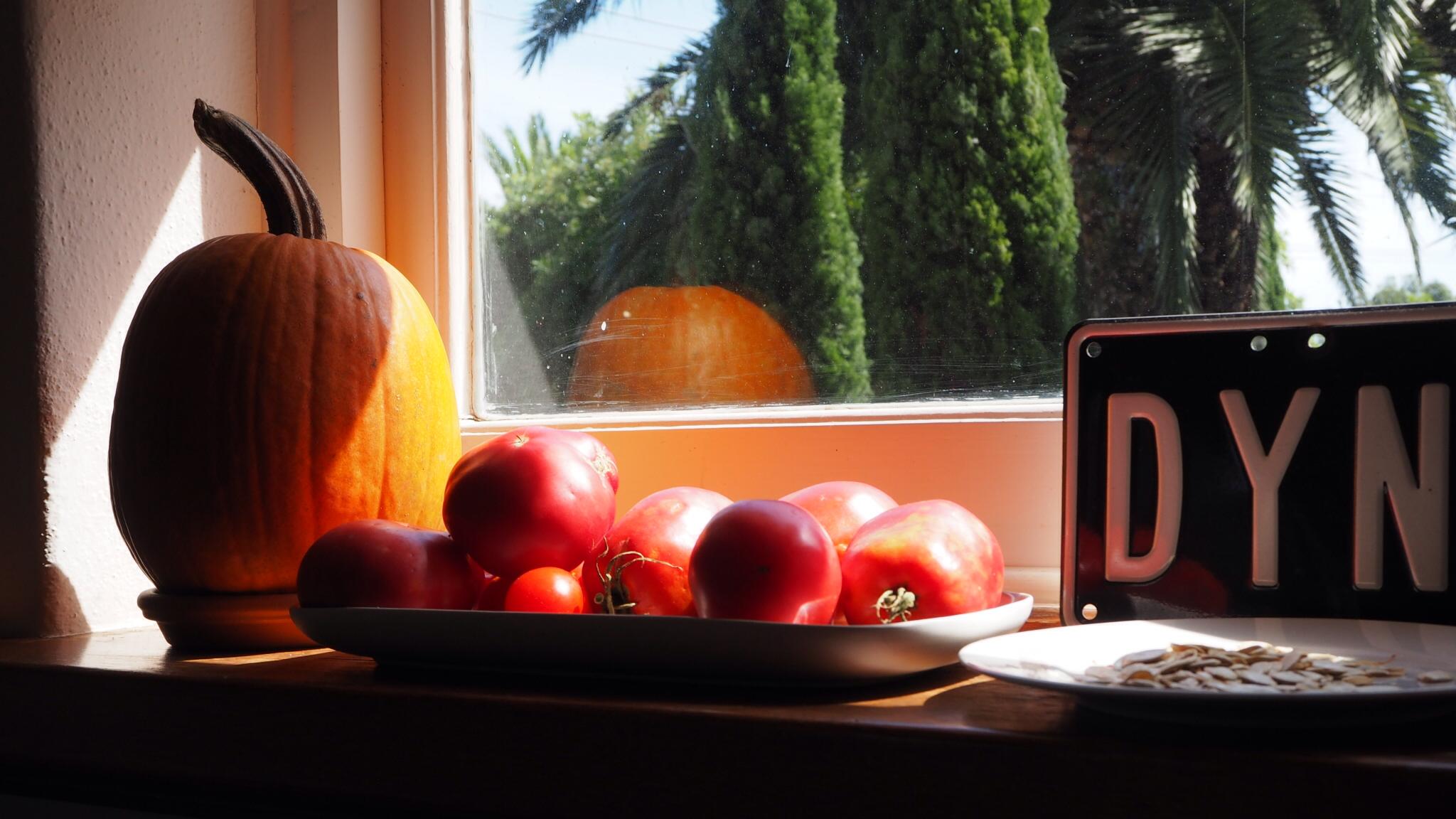Tomatoes ripen on window sill in the sun