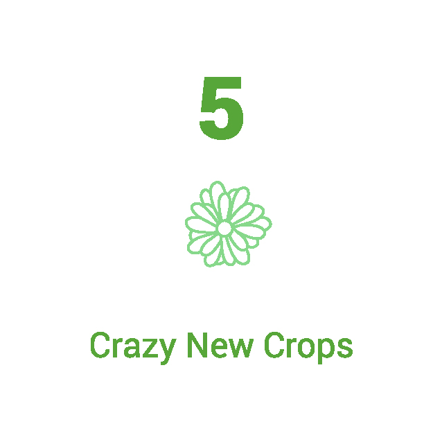 Annual Report_5 New Crops-01.jpg
