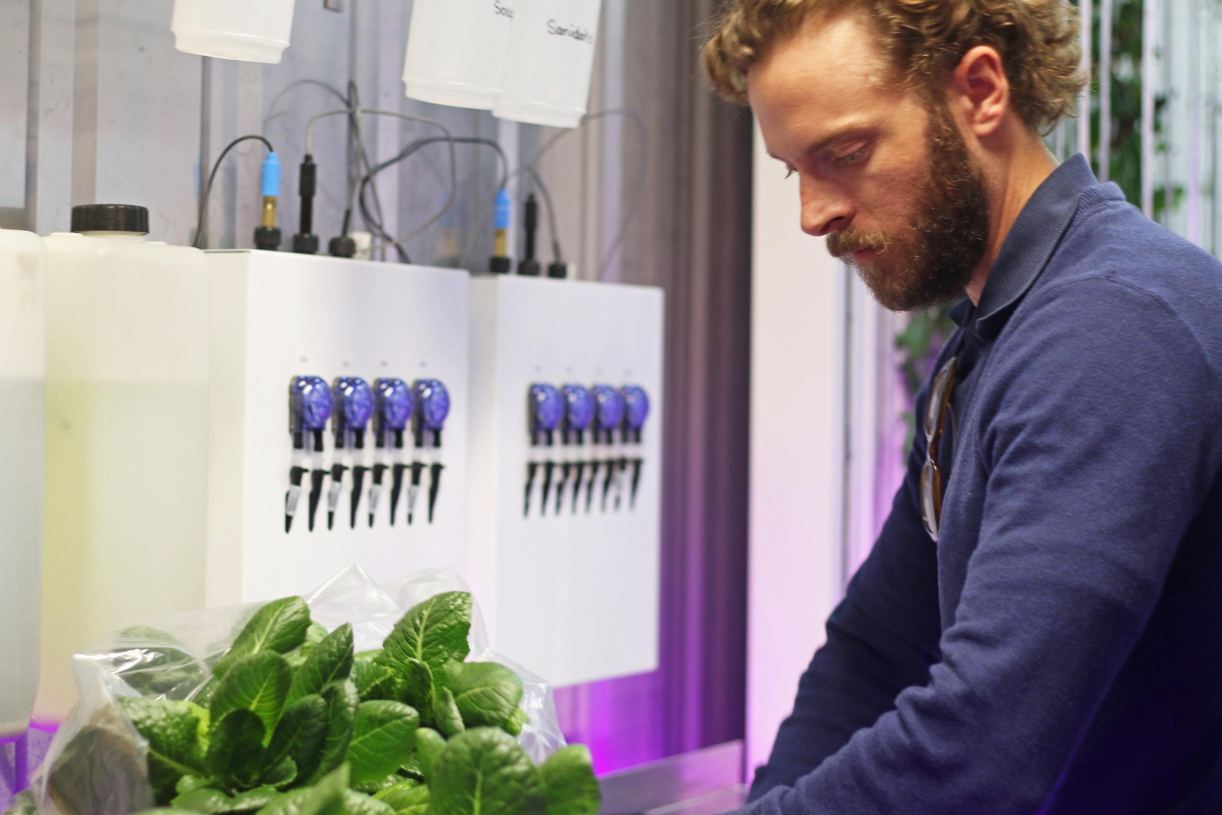 Andrew Harvesting in the Farm