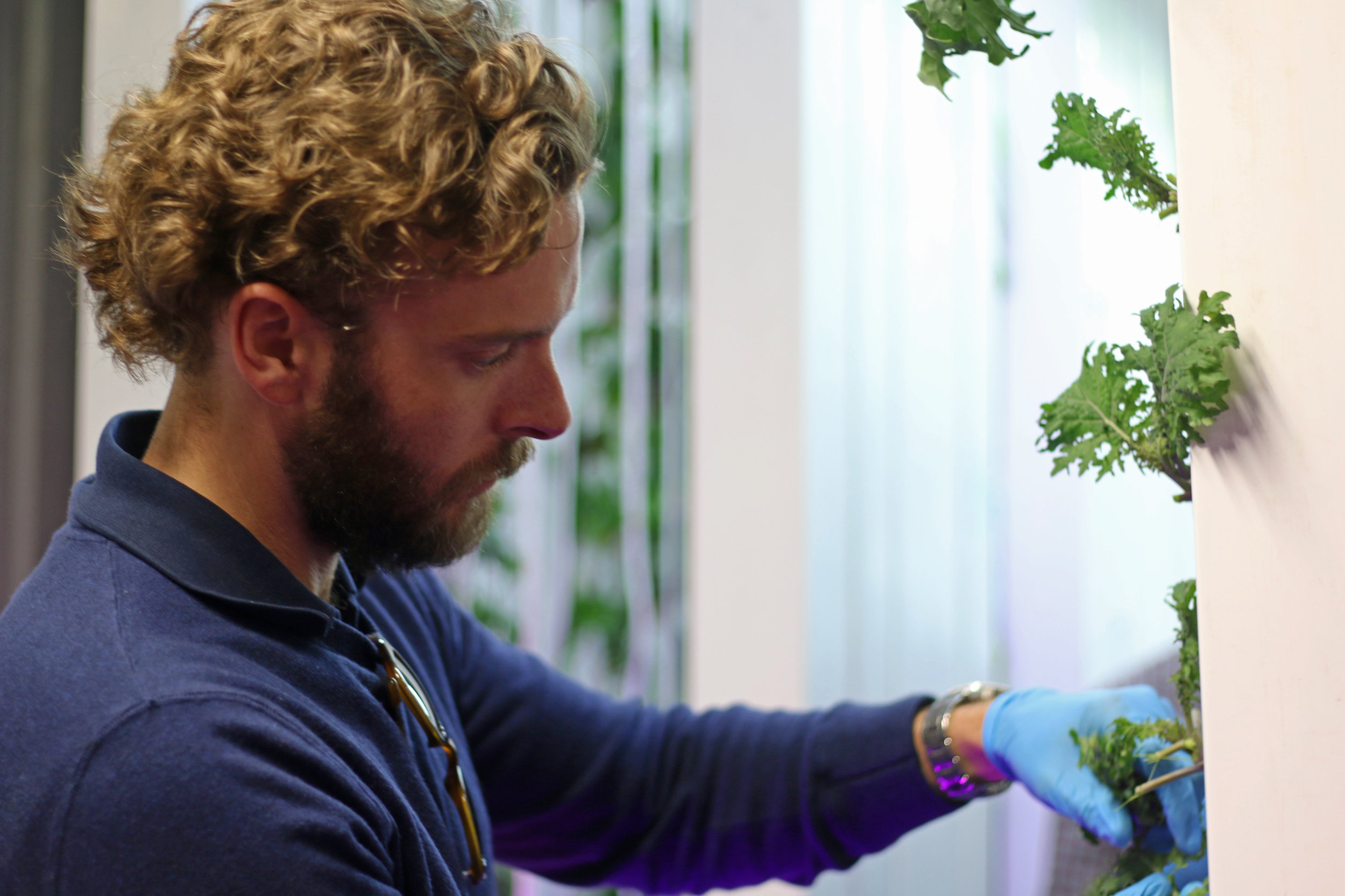 Andrew Checking on Kale Plants