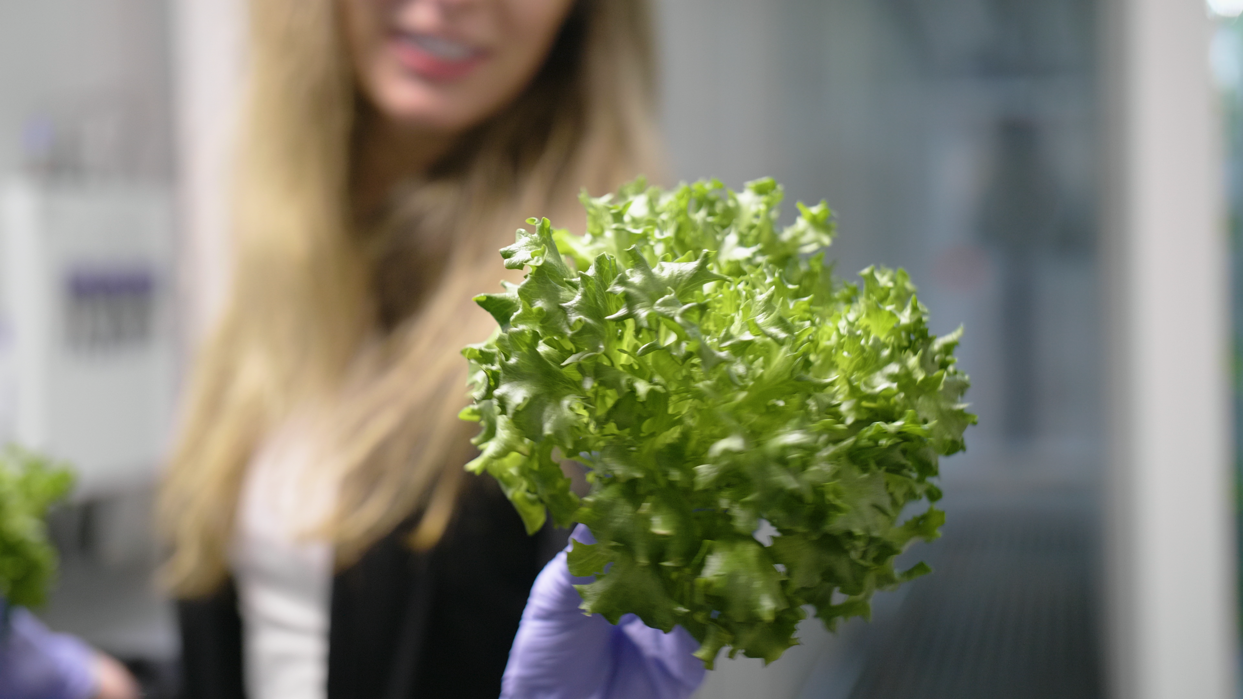 Beautiful Lettuce Harvested from Leafy Green Machine™