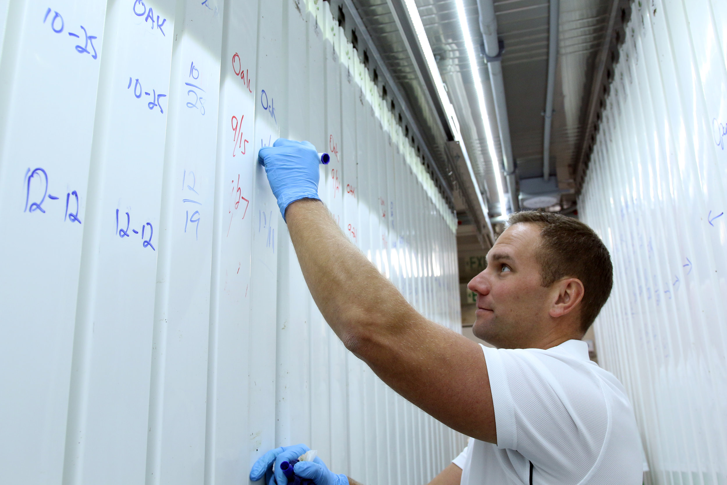 Ian keeping track of transplanted seedlings.