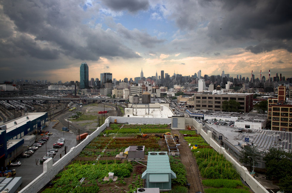 Largest rooftop farm in the world in Brooklyn Photo:  Pop Up City