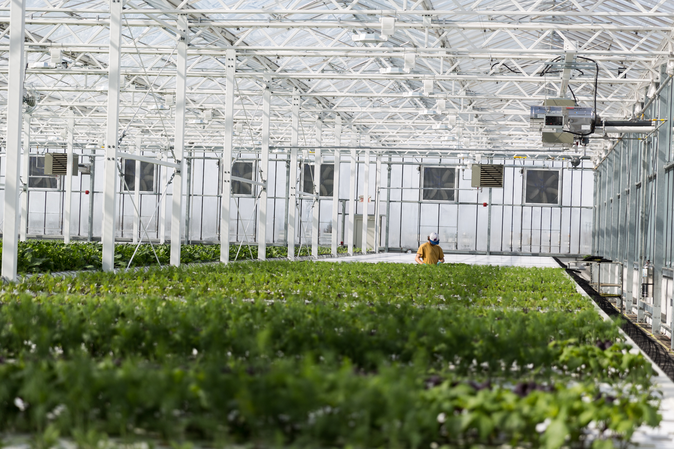Lufa Farms in Montreal Photo:  Green House Canada