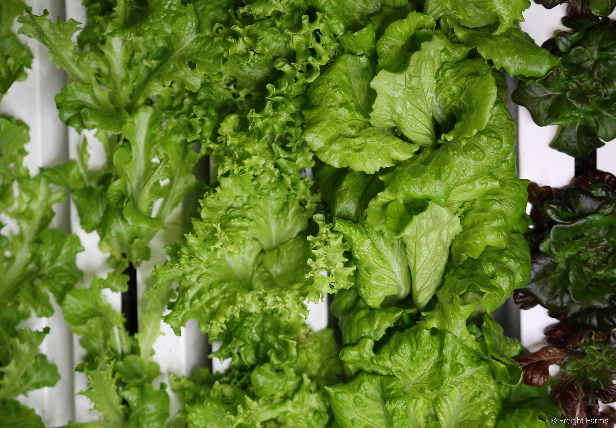 Freight Farms_Boston_Interior_Lettuce_1.jpg