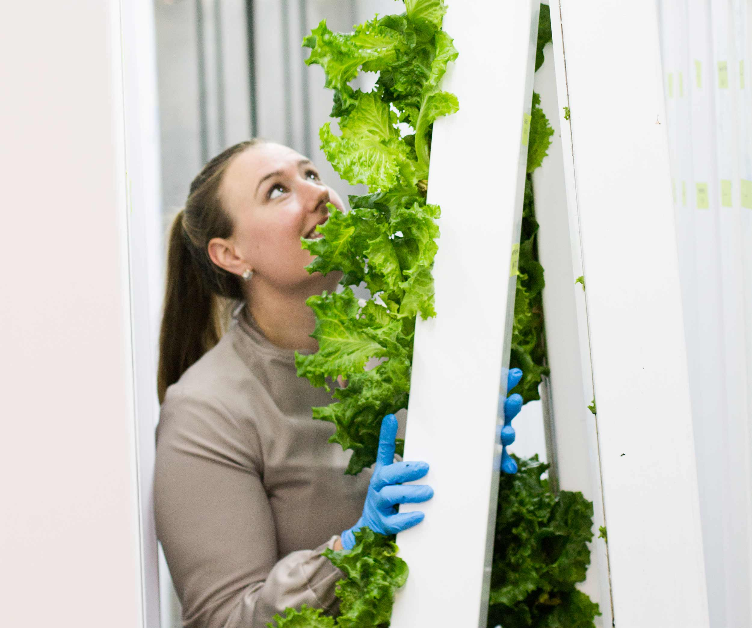 """""""If we pick something in the morning and a student is eating it for noontime, the nutrients are definitely right there. It's the best way to consume produce that is locally grown.""""  Shauna Spillane Food Service Director   Sodexo at Cumberland High School"""
