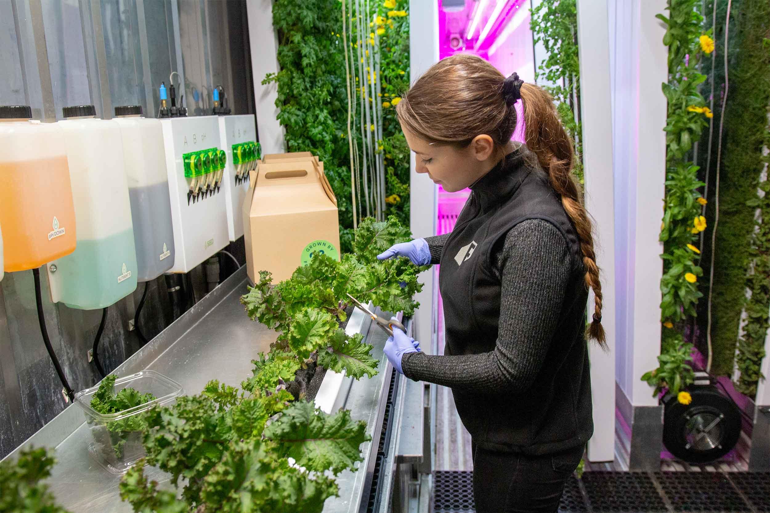 WeWork's farmer, Francesca, harvests kale for upcoming WeWork delivery.