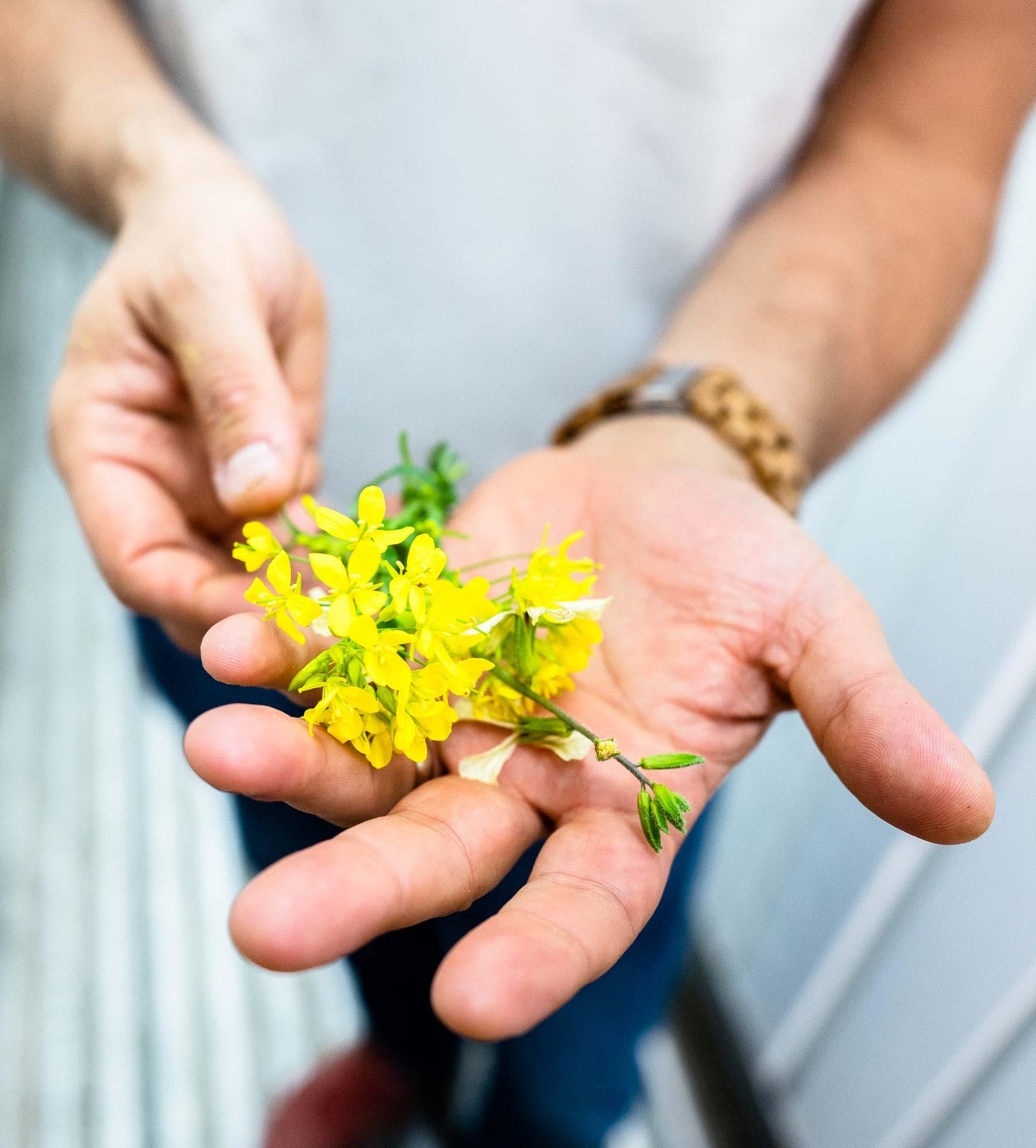 Hammock-Greens-Flower.jpg