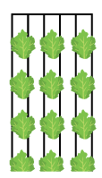 Freight Farms-Greenery-Crop Technique - Row Planting.png