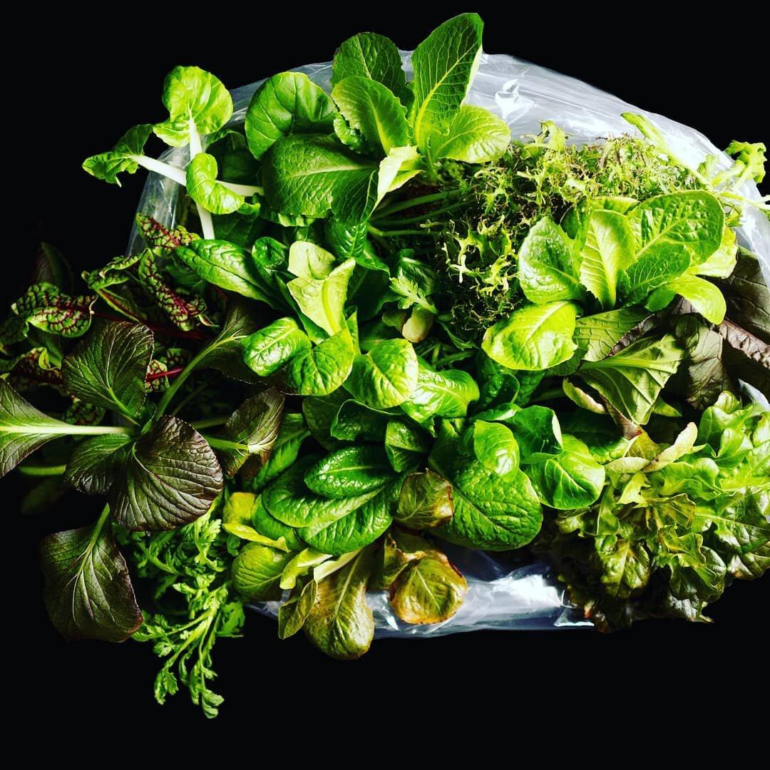Hammock-Greens-Start-a-Farming-Business.png