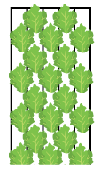 Linear planting  for smaller crops in all channels (1-5)