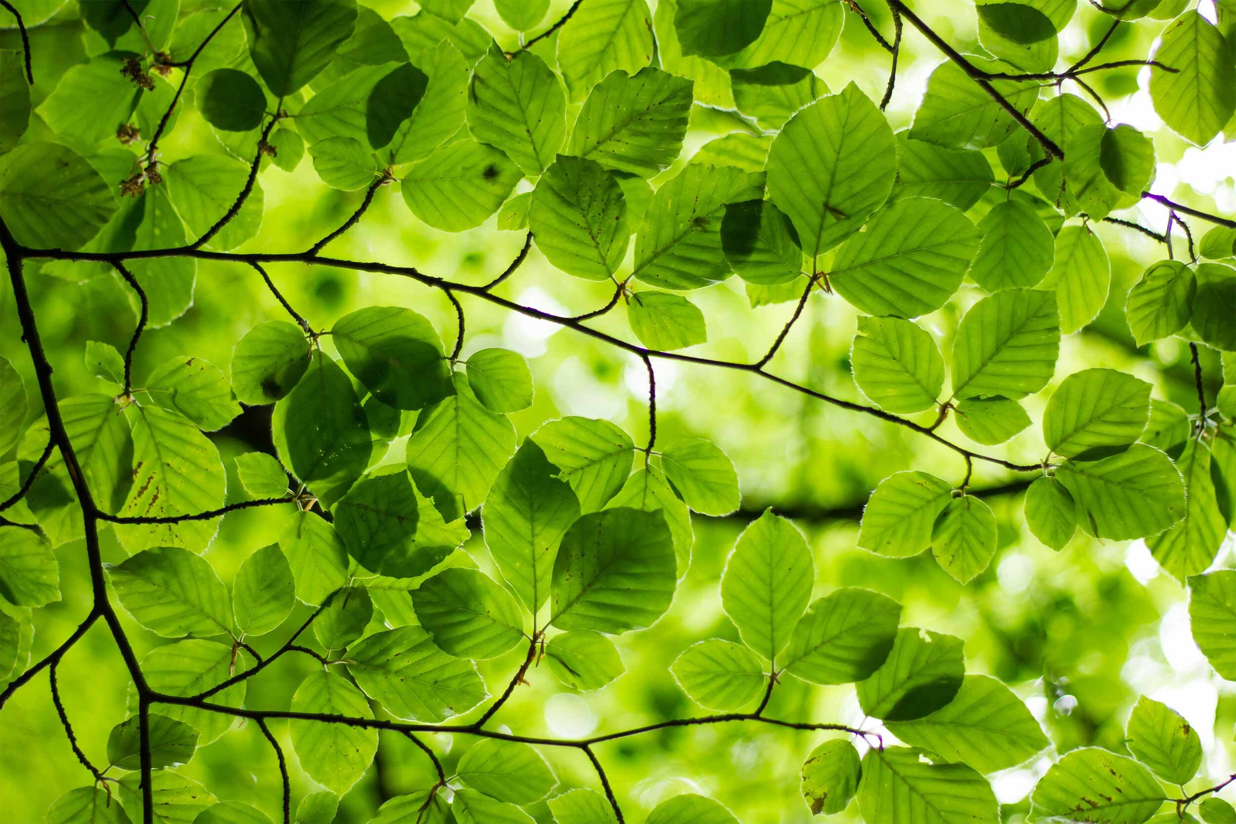 Greenery_Photosynthesis_Grow Lights.jpg