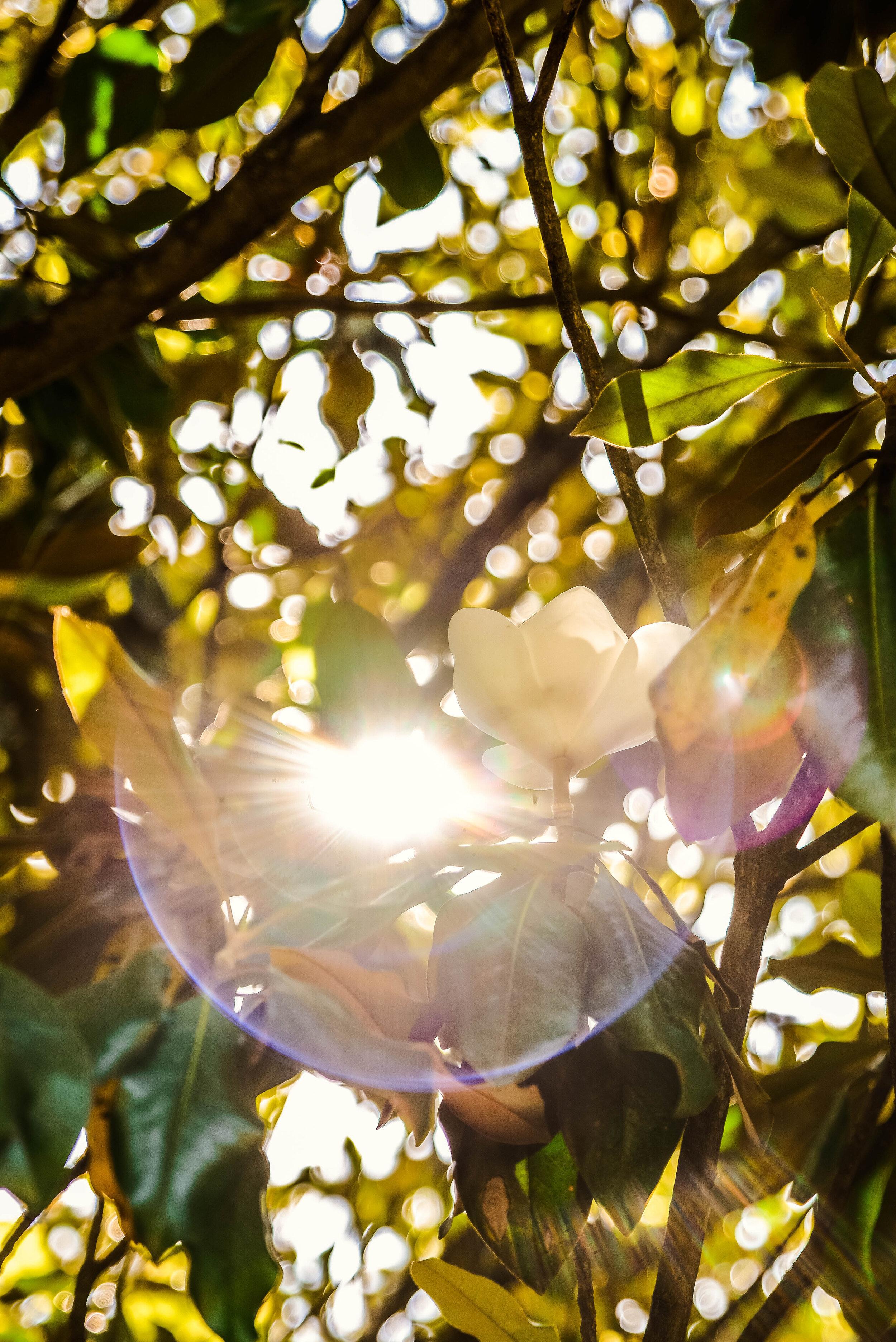 Freight Farms_Indoor Grow Lights vs Sunlight