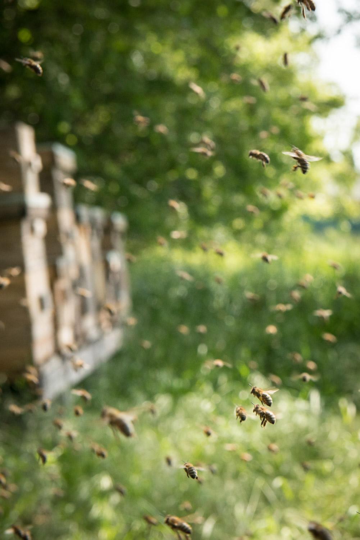 Bienenflug in den Wiener Auen
