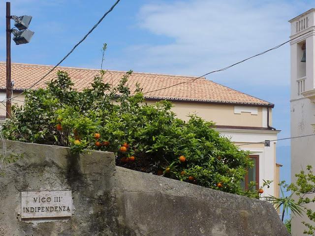oranges+in+neighbours+garden.jpg
