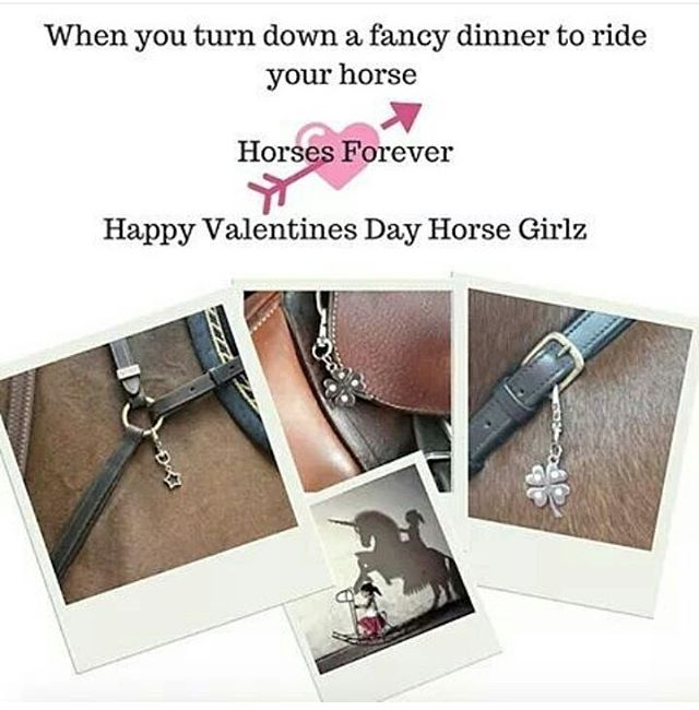 I have proudly made the right choice ;) #jaxson_and_berry #jaxsonandberry #horses #horsesforlife #horsesforever #happyvalentinesdayhorsegirlz