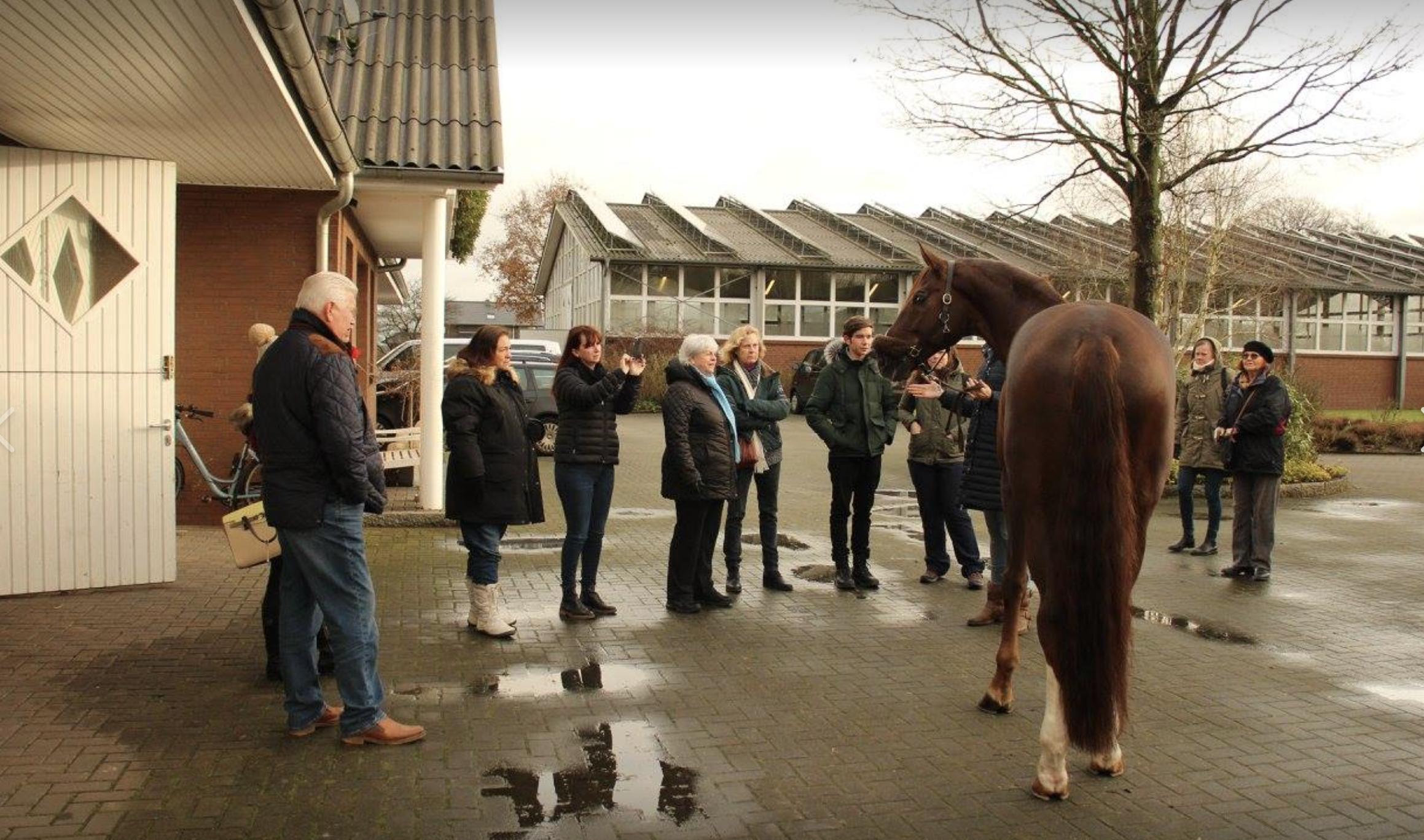 Hengstestation Ahlers.... OWM Admiring the handsome stallion Best of Gold