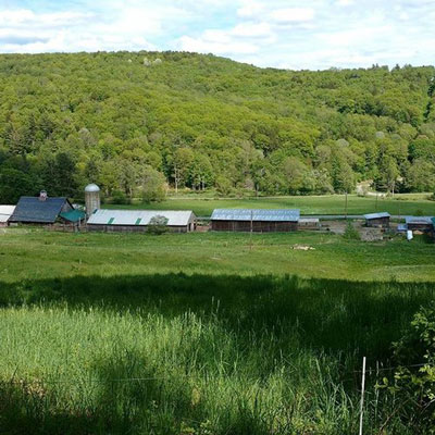 farm-green2.jpg