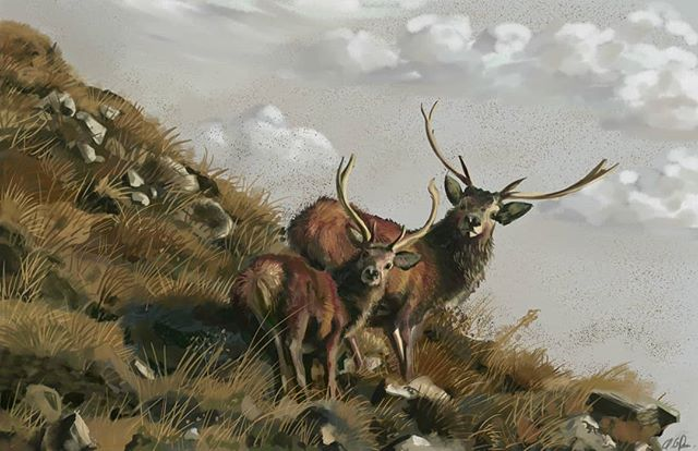 Master of inconsistent art on Instagram.  D-d-d-deer. #art #artistofinstagram #deer #painting #illustration #eireillustrations #instahub #makingart #ireland #artoftheday #artwork #standinglikewhat #deerbutt #wildlifeart