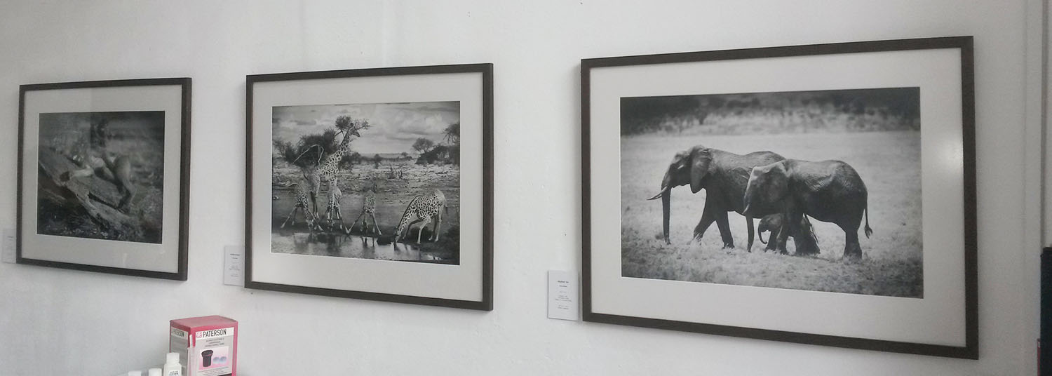 'Africa in Mono', series of African wildlife printed in monochrome by Icarus Owen exhibiting at Photoghost, WASPS Studios.