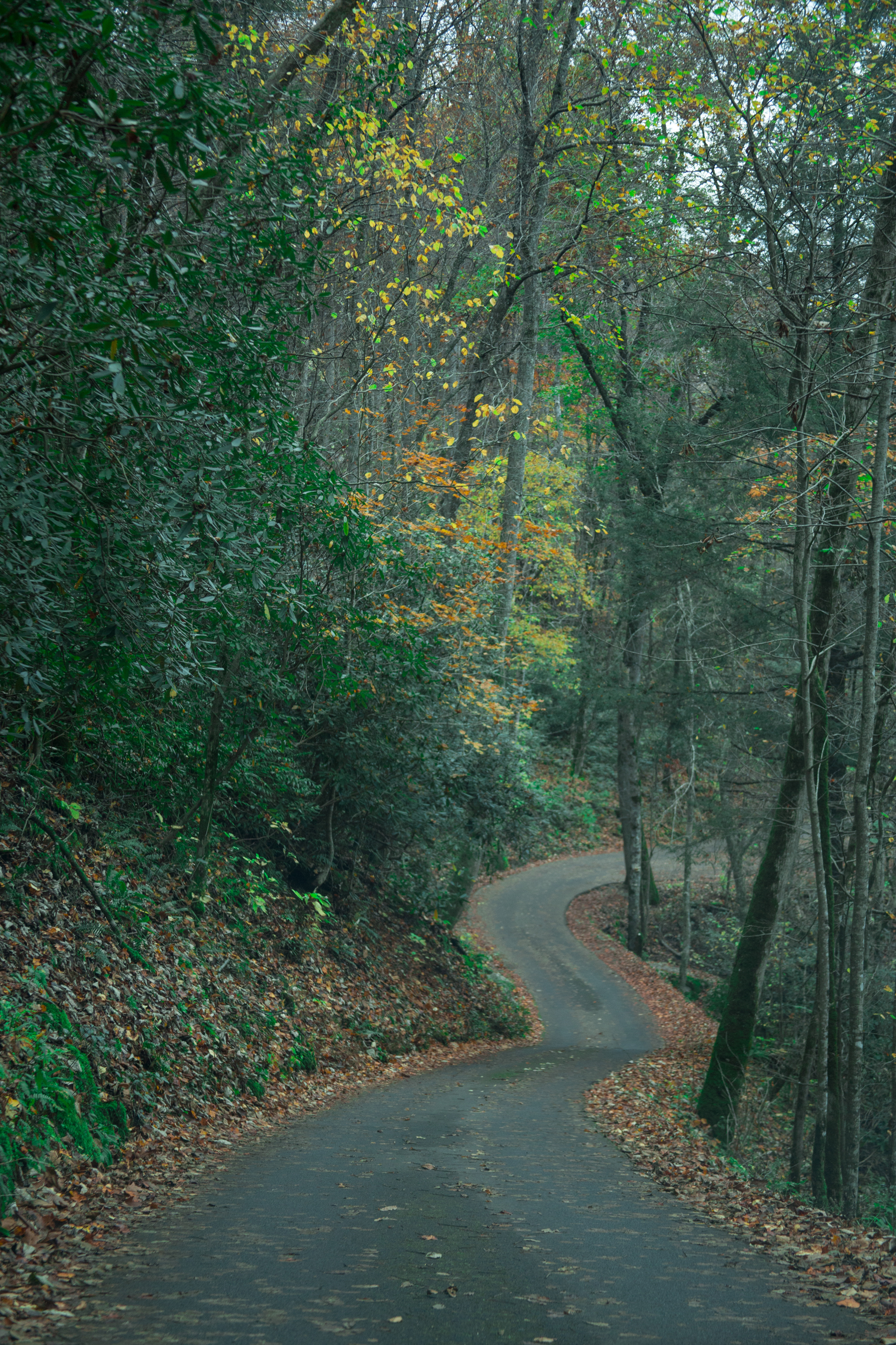 smoky-mountains-travel-chamber-photoraphy-antoine-trail.jpg