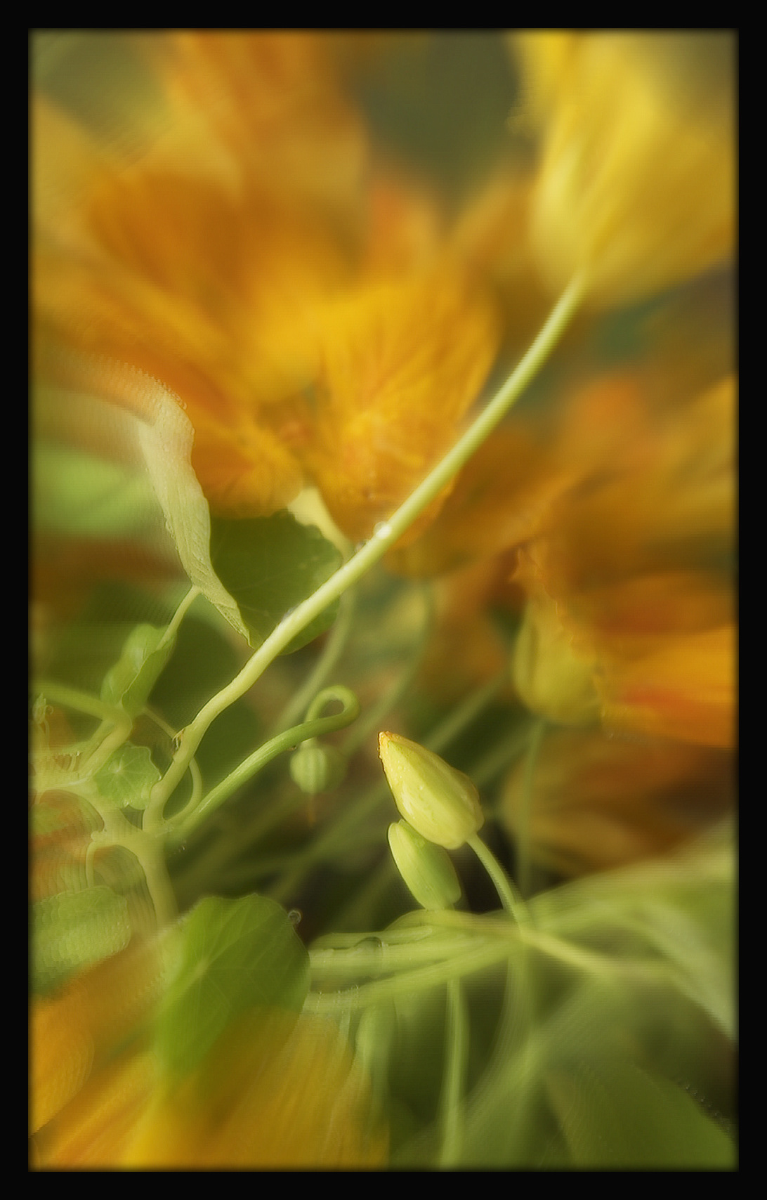 First Horizontal slideshow-192.jpg