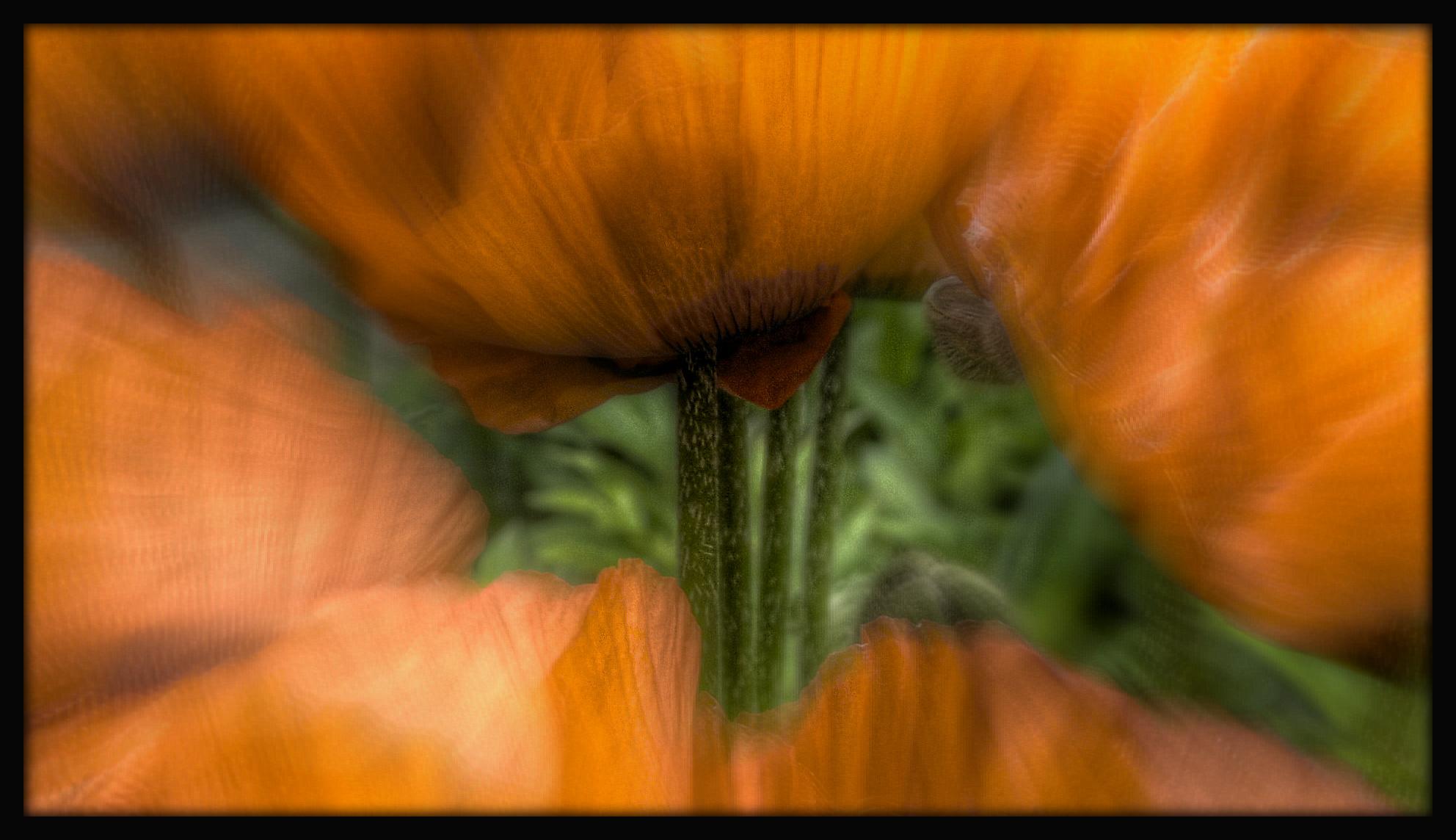 First Horizontal slideshow-076.jpg