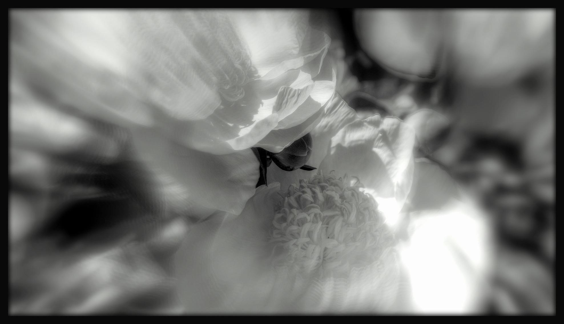 First Horizontal slideshow-038.jpg