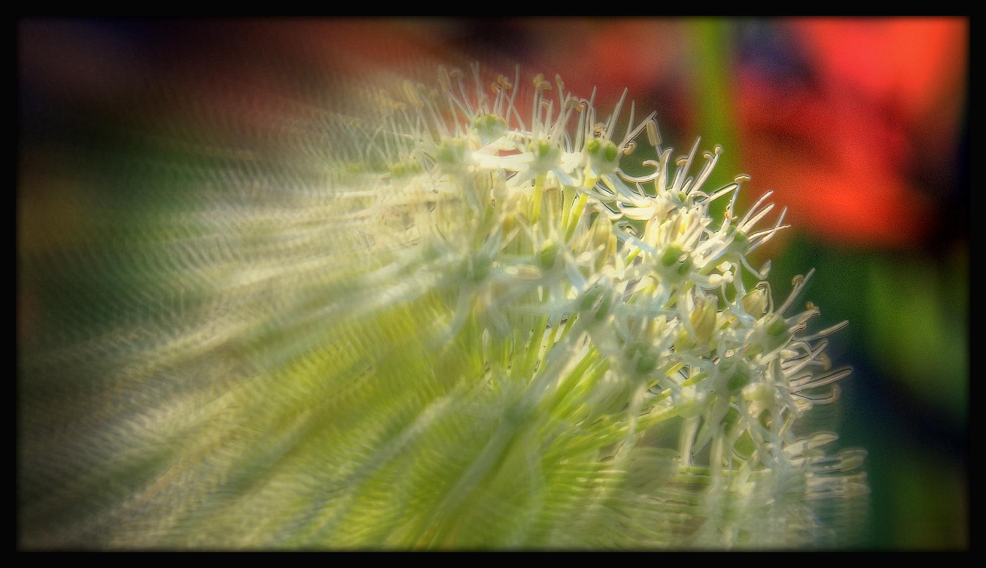 First Horizontal slideshow-030.jpg