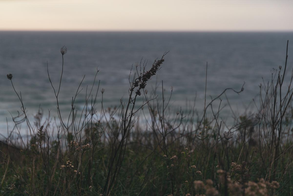 Aquinnah Seaweeds.jpg