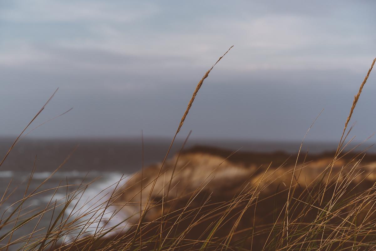 In the Wind.jpg